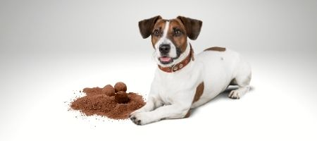 How Much Chocolate Can Kill a Dog