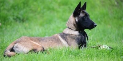 Which Breed of Dog Does the US Secret
