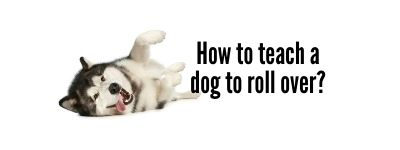 How to teach a dog to roll over
