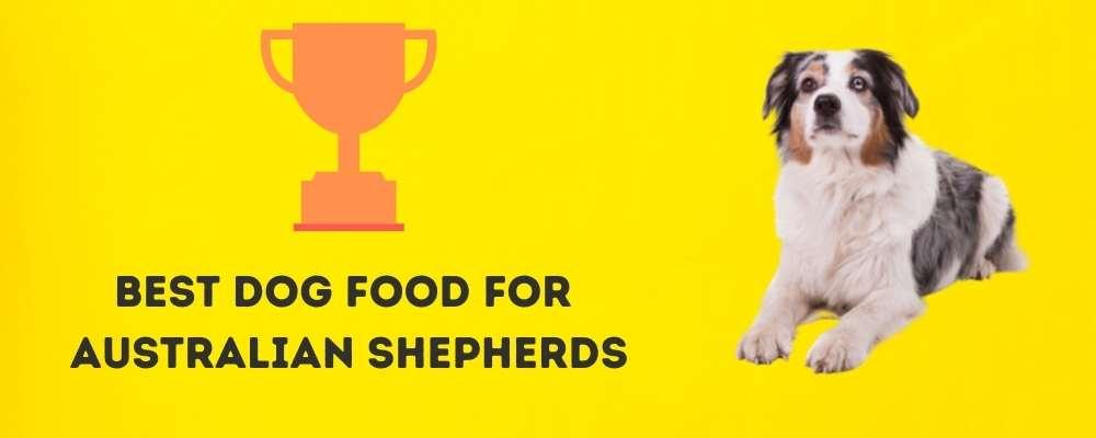 Best Dog Food for Australian Shepherds