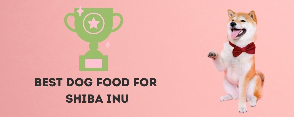 Best Dog Food For Shiba Inu