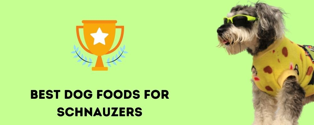 Best Dog Foods for Schnauzers
