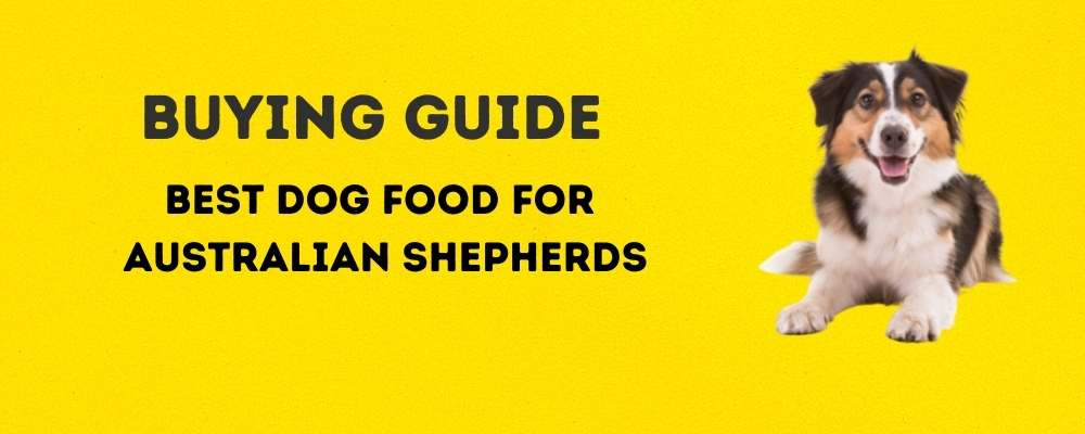 Buying Guide: Best Dog Food for Australian Shepherds