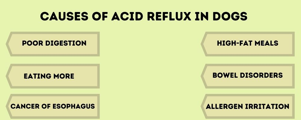 Common Causes of Acid Reflux in Dogs