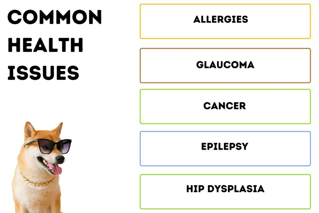 Common Health Issues In Shiba Inu Dogs