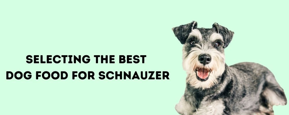 Selecting the Best Dog Food for schnauzer