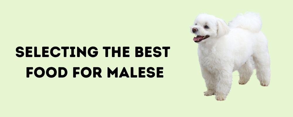 Best Dog Foods for Maltese